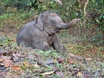 Elefante recién nacido divertido del bebé Primero pasos y exploración del mundo imagen de archivo