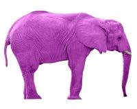 Elefante rosado w/Paths imagenes de archivo