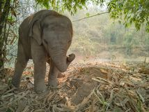 Elefante 1s-2s do bebê de Cutie imagem de stock royalty free