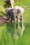 Elefante salvaje Foto de archivo libre de regalías
