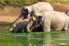 Elefante salvaje Imágenes de archivo libres de regalías