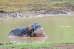 Elefante salvaje que juega el agua fotografía de archivo libre de regalías