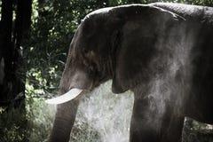 Elefante solitário no arbusto em África imagens de stock royalty free