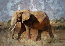 Elefante stagionato Fotografia Stock Libera da Diritti