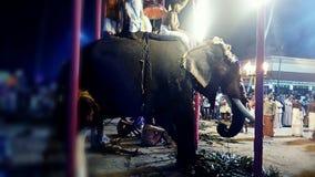 Elefante su un festivel Fotografie Stock