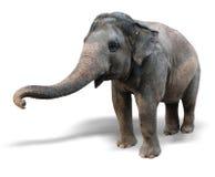 Elefante su un fondo bianco Immagine Stock