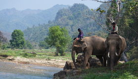 Elefante Tailândia Foto de Stock Royalty Free