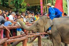 Elefante Tailândia, elefante, animal Imagem de Stock Royalty Free