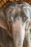 Elefante tailandés Imagen de archivo