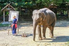 Elefante tailandês, Chiangmai Fotos de Stock