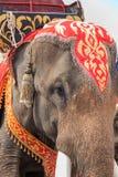 Elefante tailandese Fotografie Stock Libere da Diritti