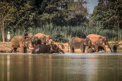 Elefante tailandese fotografia stock libera da diritti