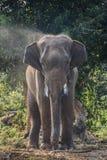 Elefante tailandese fotografia stock