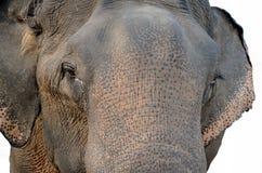 Elefante tailandese Fotografie Stock