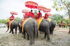 Elefante tailandese Ayutthaya Immagini Stock Libere da Diritti