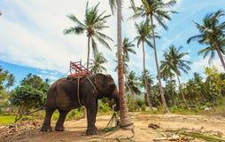 Elefante tailandese con il banco per trekking Fotografia Stock Libera da Diritti