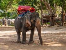 Elefante, Tailandia Immagini Stock