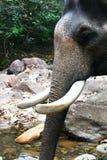 Elefante Tailandia Fotos de archivo