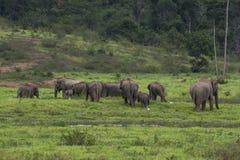 Elefante Tailandia in foresta Fotografie Stock Libere da Diritti
