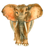 Elefante tirado mão da aquarela Fotos de Stock