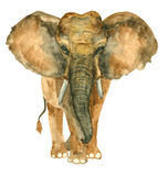 Elefante tirado mão da aquarela Foto de Stock Royalty Free