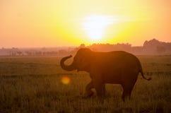 Elefante travieso del niño que se coloca en un campo del arroz en la madrugada Fotos de archivo