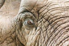 Elefante triste Fotografia Stock Libera da Diritti
