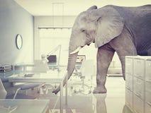 Elefante in una stanza illustrazione vettoriale