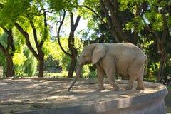 Elefante in uno zoo di Buenos Aires Fotografie Stock Libere da Diritti