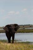 Elefante vicino ad acqua Fotografie Stock