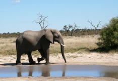 Elefante vicino ad un waterhole Fotografia Stock