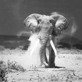 Elefante viejo imagen de archivo