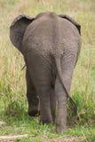 Elefante visto da dietro fotografie stock
