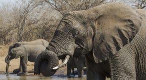 Elefante a Waterhole Fotografia Stock Libera da Diritti