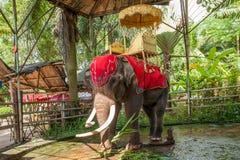 Elefante Xishuangbanna Dai Park Xiaoganlanba Imagens de Stock Royalty Free