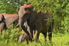 Elefante y bebé que juegan en la suciedad Fotografía de archivo