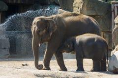 Elefante y elefante del bebé Imagen de archivo