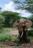 Elefante y fango Imagen de archivo libre de regalías