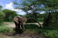 Elefante y fango Foto de archivo