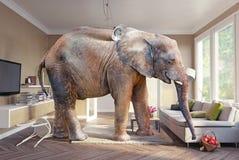 Elefante y la cerveza ilustración del vector