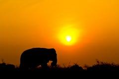 Elefante y puesta del sol Imagenes de archivo
