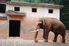 Elefante y su casa Imagen de archivo libre de regalías