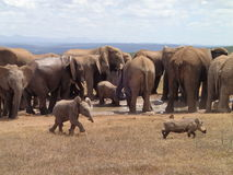 Elefante y Ward Hawk del bebé Imagen de archivo libre de regalías