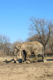 Elefante in zoo Fotografie Stock Libere da Diritti