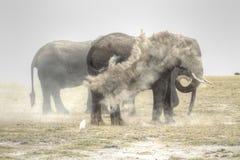 elefanteelefant Royaltyfri Bild