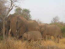 elefanten stockfotos