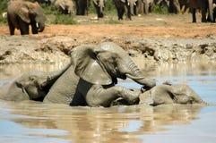 Elefanten Lizenzfreie Stockfotografie