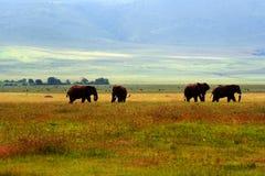 Elefanten Lizenzfreies Stockbild