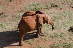 Elefanten Stockbild