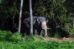 Elefanten Royaltyfri Fotografi